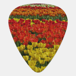 Tulipes d'arc-en-ciel de soleil onglet de guitare
