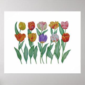 Tulipes de ressort posters