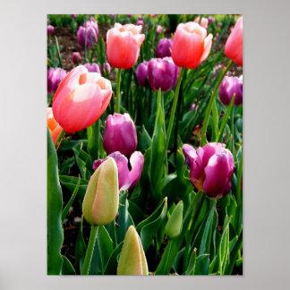 Tulipes de ressort affiche
