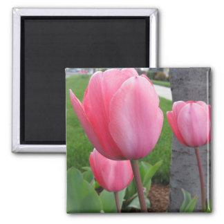 Tulipes de ressort magnets