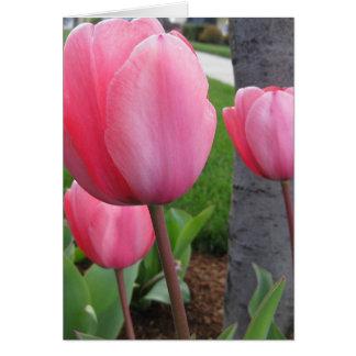 Tulipes de ressort cartes