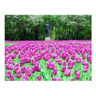 Tulipes de ressort dans la carte postale du jardin