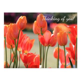 """Tulipes de ressort """"pensant à vous !"""" Carte Cartes Postales"""