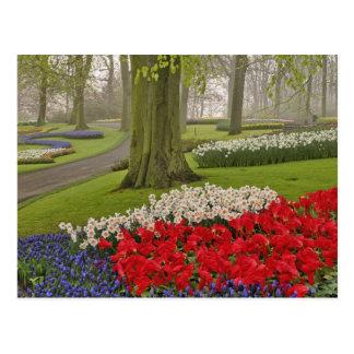 Tulipes et jonquilles, jardins de Keukenhof, Carte Postale