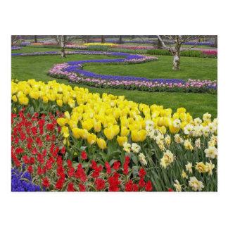 Tulipes, jacinthe de raisin, et jonquilles, cartes postales