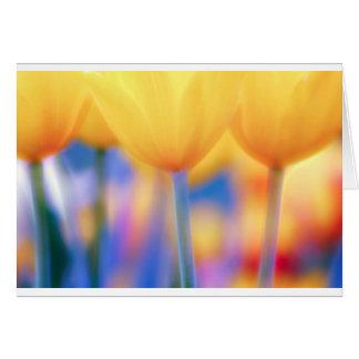 Tulipes jaunes avec le bleu carte de vœux