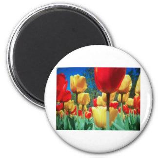 tulipes jaunes et rouges aimants pour réfrigérateur