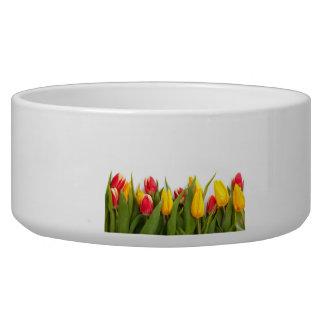 Tulipes jaunes et rouges assiettes pour chien