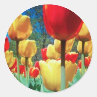 tulipes jaunes et rouges adhésifs