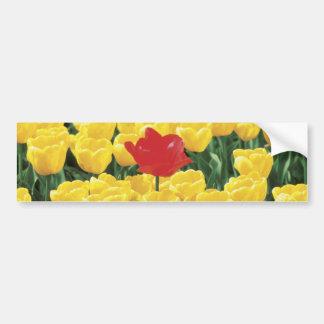 Tulipes jaunes et rouges autocollant de voiture