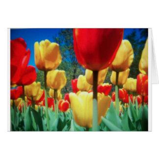 tulipes jaunes et rouges carte de vœux