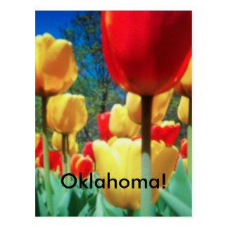 tulipes jaunes et rouges (carte postale) carte postale