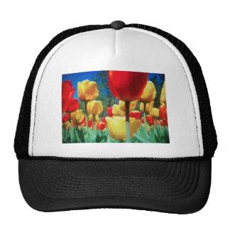 tulipes jaunes et rouges casquette de camionneur