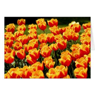 Tulipes jaunes et rouges dans le printemps carte de vœux