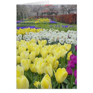 Tulipes, jonquilles, et fleurs de jacinthe de rais carte de vœux