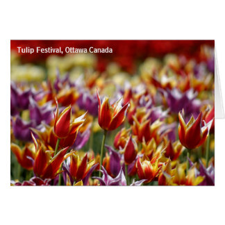 Tulipes multicolores carte de vœux