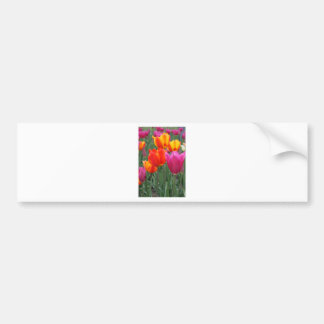 Tulipes oranges et roses autocollant de voiture