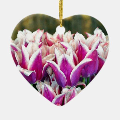 Tulipes pourpres et blanches de ressort ornements