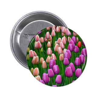 Tulipes roses et pourpres de ressort