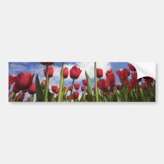 Tulipes rouges, ciel bleu autocollant de voiture