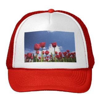 Tulipes rouges, ciel bleu casquette de camionneur