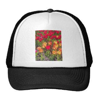 Tulipes rouges de ressort casquette