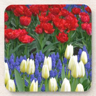 Tulipes rouges et blanches de ressort sous-bock