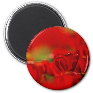 Tulipes rouges et jaunes magnets pour réfrigérateur