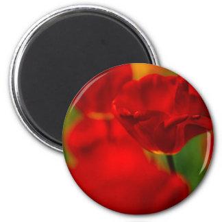Tulipes rouges et jaunes aimants pour réfrigérateur
