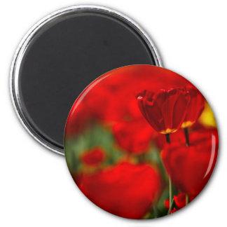 Tulipes rouges et jaunes aimant