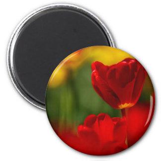 Tulipes rouges et jaunes aimant pour réfrigérateur