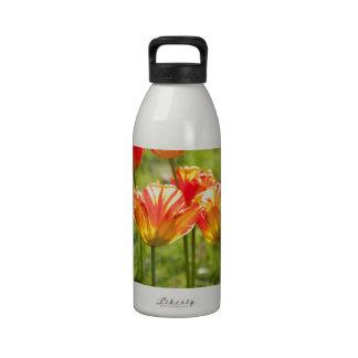 Tulipes rouges et jaunes bouteille