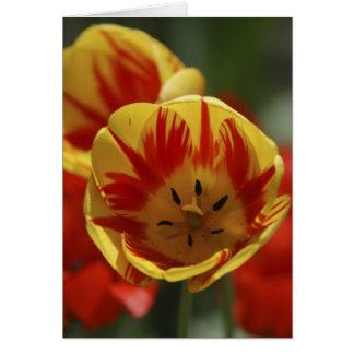 Tulipes rouges et jaunes carte de vœux