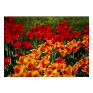 Tulipes rouges et jaunes carte