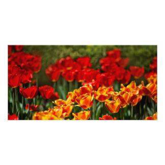 Tulipes rouges et jaunes photocarte customisée