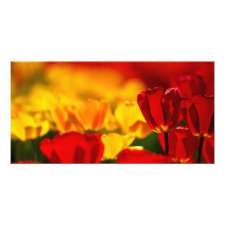 Tulipes rouges et jaunes cartes avec photo