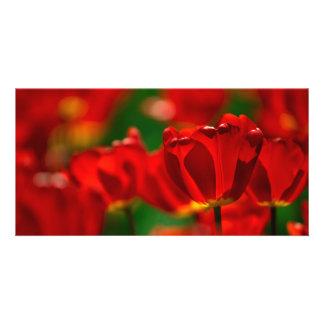 Tulipes rouges et jaunes carte avec photo