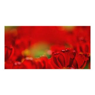 Tulipes rouges et jaunes cartes de vœux avec photo