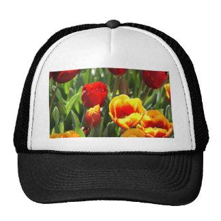 Tulipes rouges et jaunes casquette de camionneur