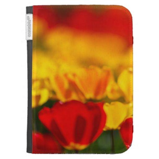 Tulipes rouges et jaunes coques kindle