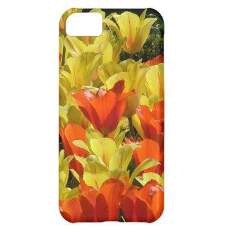 Tulipes rouges et jaunes