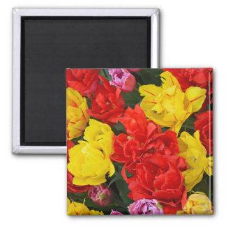 Tulipes rouges et jaunes de ressort magnet carré