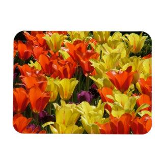 Tulipes rouges et jaunes magnet en vinyle