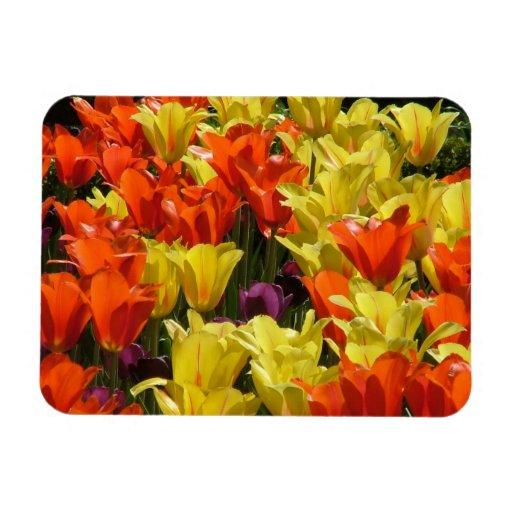 Tulipes rouges et jaunes magnets