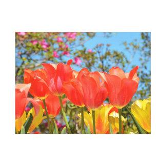 Tulipes rouges et jaunes toiles tendues