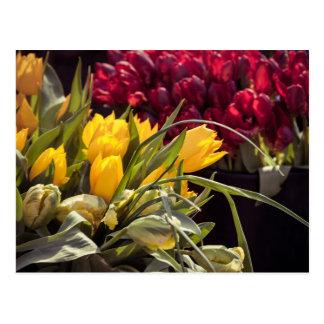Tulipes sur le marché cartes postales