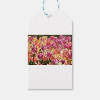 Tulips #2 gift tags