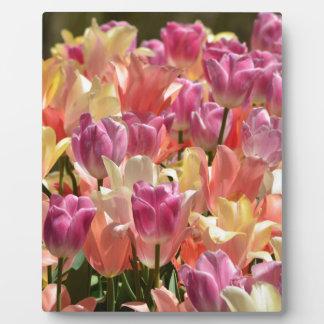 Tulips #2 plaque
