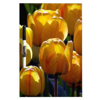 Tulips aglow Dry-Erase board