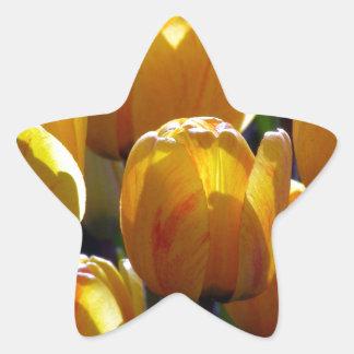 Tulips aglow star sticker